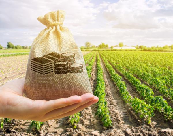 GettyImages Andrii Yalanskyi farmer income farming money