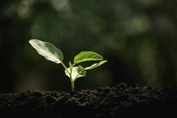 GettyImages-Mintr soil plant earth sustainability