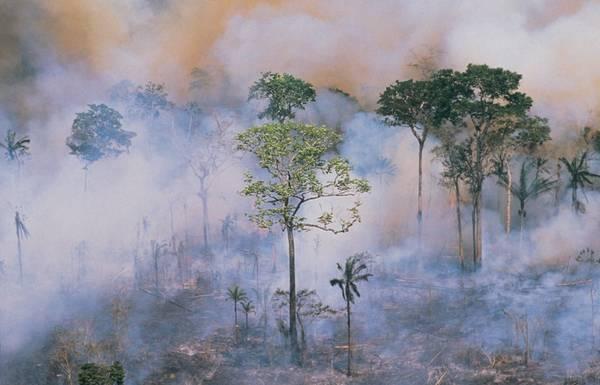 GettyImages-Stockbyte deforestation