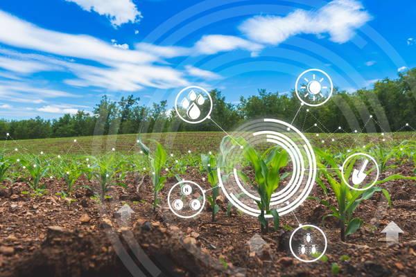 GettyImages-lamyai digitalisation field food tech